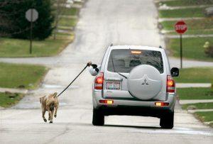 inactividad-fisica_-paseando-el-perro-en-coche